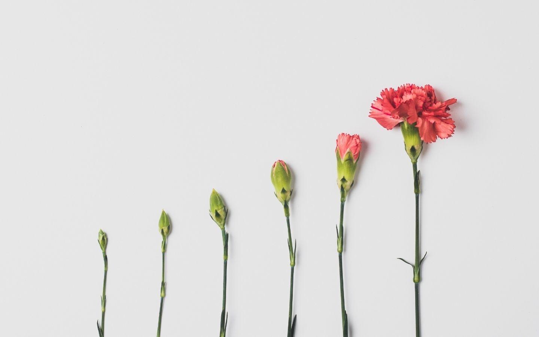 Selbst Liebe kleine Blumen große Blumen